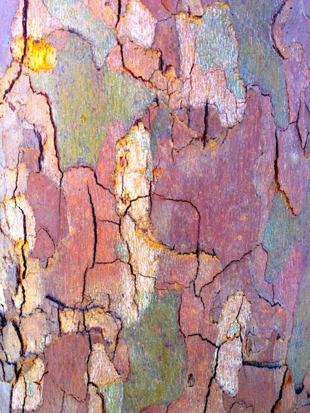 Puzzle Bark by Louise Wannier